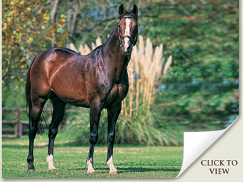 Northern Guest Champion Broodmare Sire