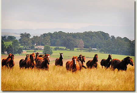 summerhill stud farm natal midlands