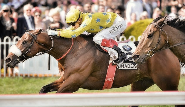 dunaden horse