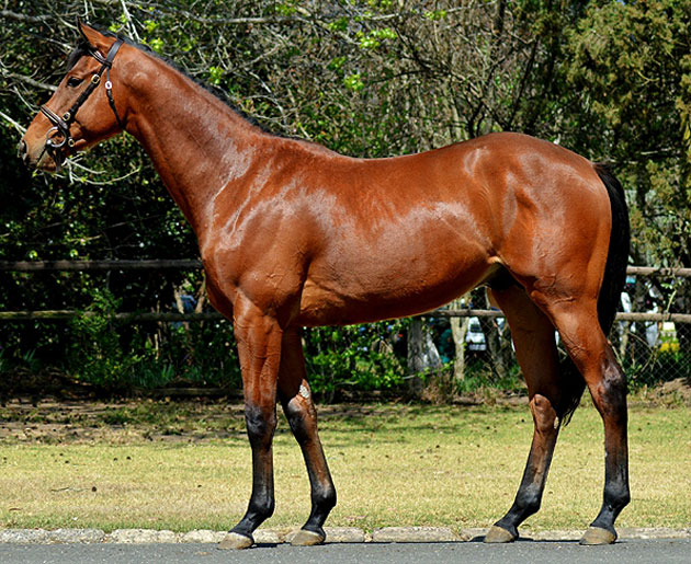 Lot 217: Pers Se (Admire Main x Nevada Sunrise)