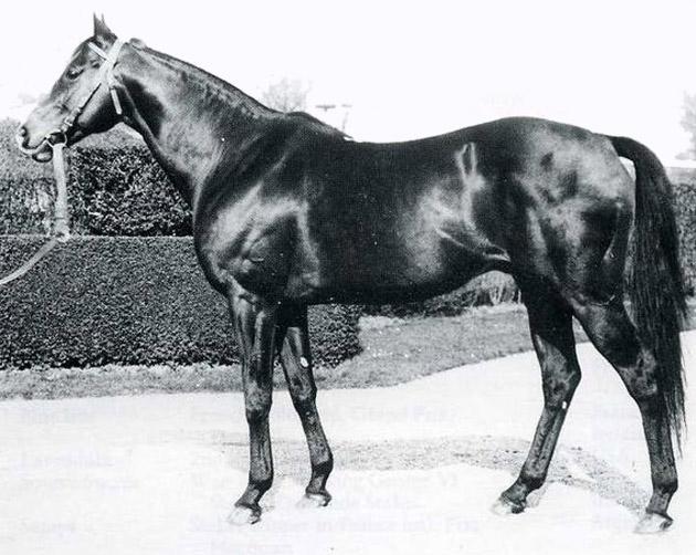 Djebel Horse