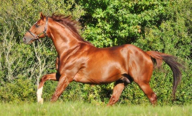 Admire Main Stallion / Greig Muir (p)