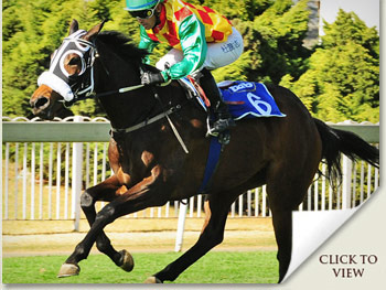 checcetti emperors palace ready to run cup candidate