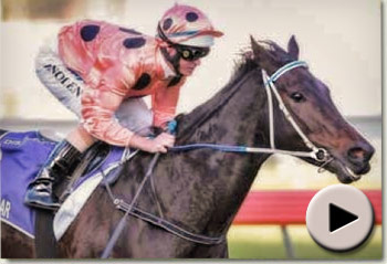 Black Caviar wins The Goodwood