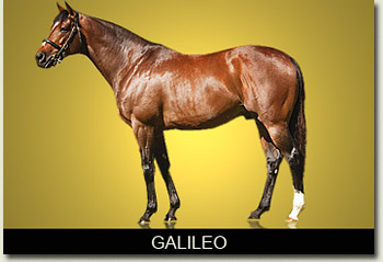 galileo coolmore stud