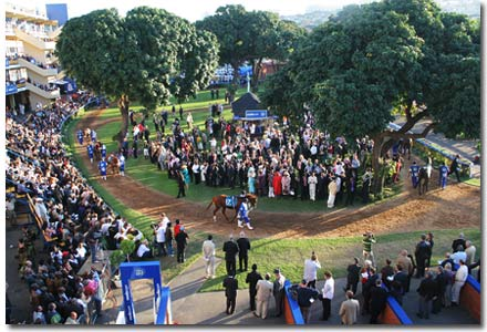 durban july parade ring