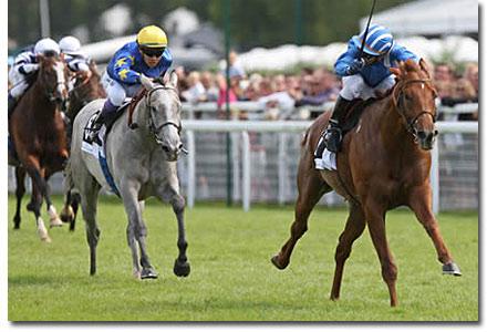 tamayuz racehorse