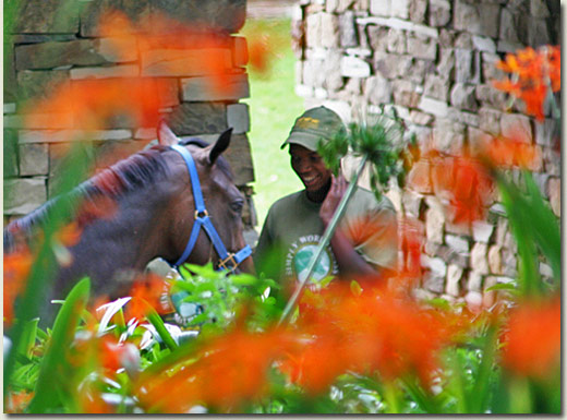 summerhill yearling and groom (michael nefdt)