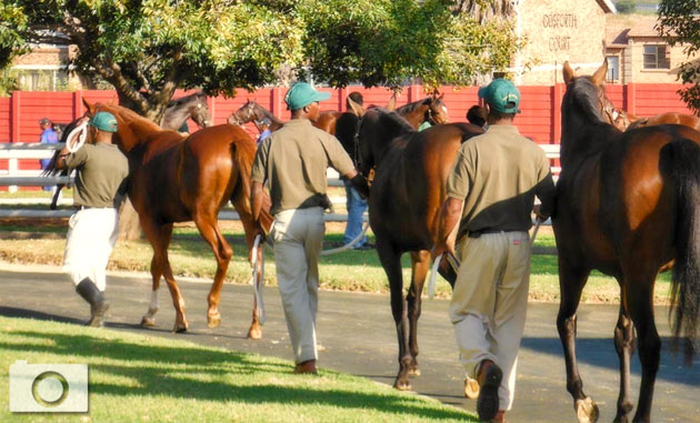 TBA Sales Complex - National Yearling Sale