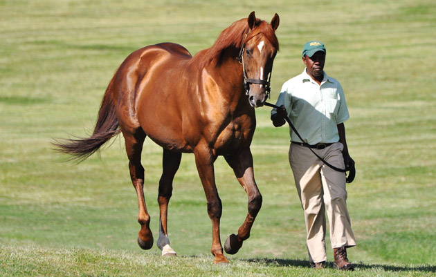 AP Arrow by AP Indy Stallion