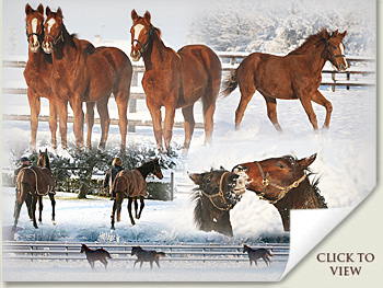 snow at normandy stud