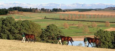 summerhill farm south africa