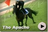 The Apache - Vodacom Durban July Gallops