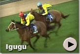 Igugu - Vodacom Durban July Gallops