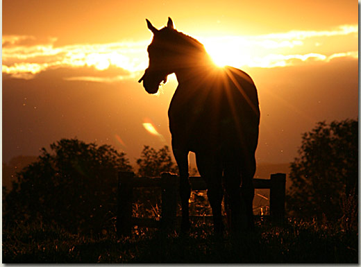 stallion sunset (michael nefdt)