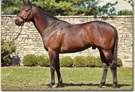 Grand Slam Stallion