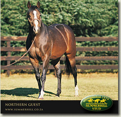 northern guest stallion