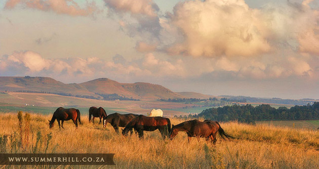 Summerhill Stud, Mooi River, South Africa