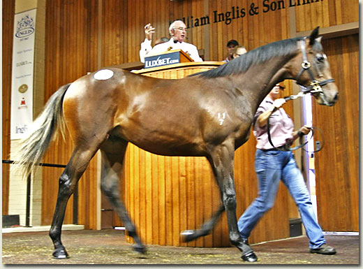 2009 inglis melbourne premier yearling sale