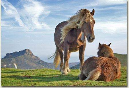 Horses in the Mountain Plains