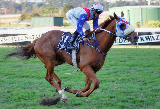 No Worries - KZN Breeders Million Mile / Gold Circle (p)