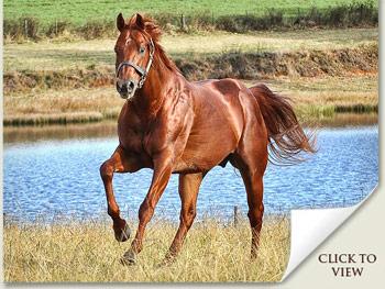 Visionaire Stallion