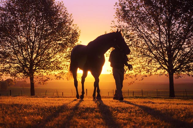 Stallion and groom at sunset