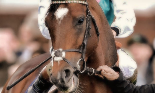 Frankel - Cartier Horse of the Year