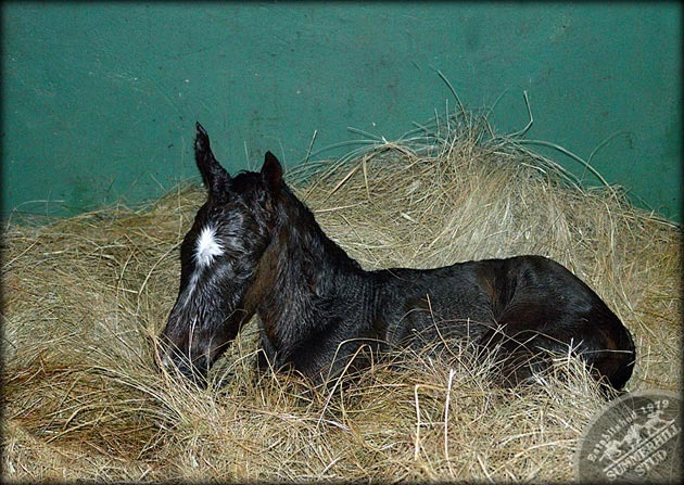 foals-3.jpg