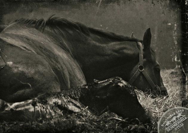 foals-2.jpg