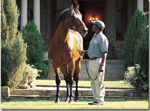 stallion albarahin
