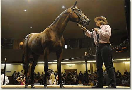 Inglis Melbourne Premier Yearling Sale
