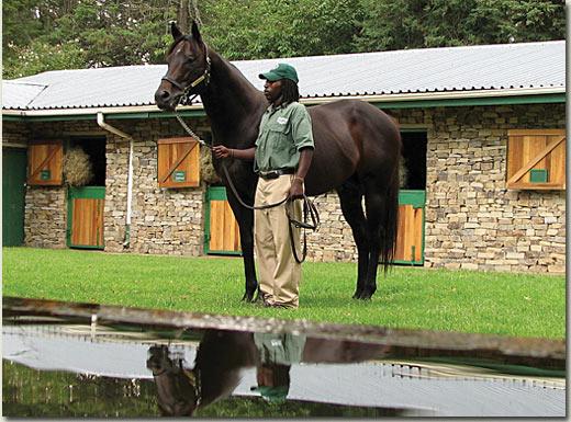 way west stallion