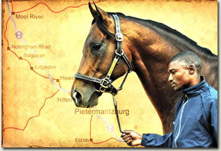 Thoroughbred Farming in the KwaZulu-Natal Midlands
