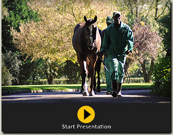 summerhill stud national sale yearlings departure