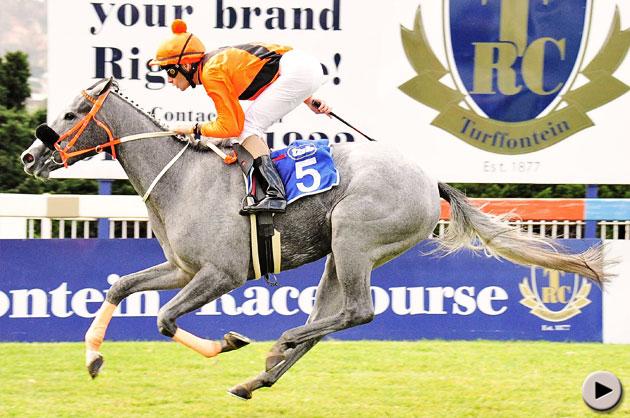 Dover Beach Horse