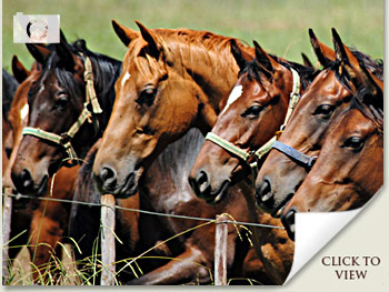 horses in training photos