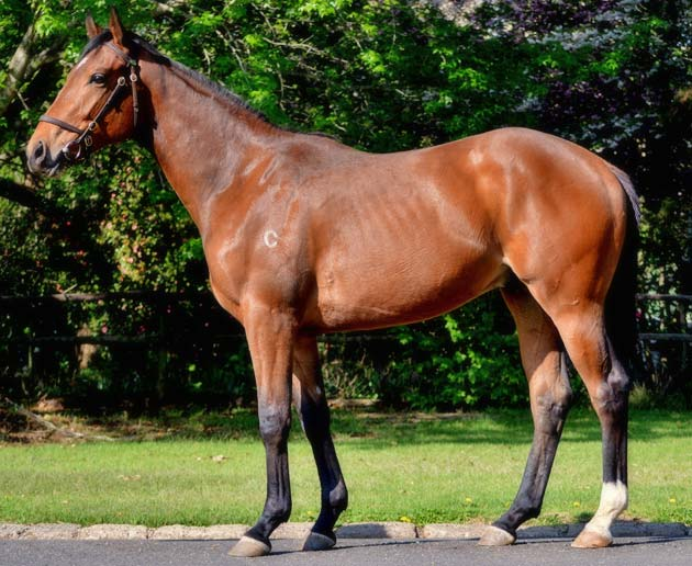 Ready To Run Sale Lot 88 - Fastnet Rock x Reem Albaraari