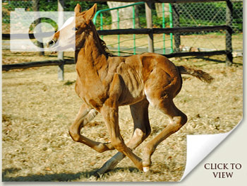 Spring Foal Photos