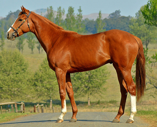 Lot 161: Petrichor (AP Arrow x Guest Gallery)