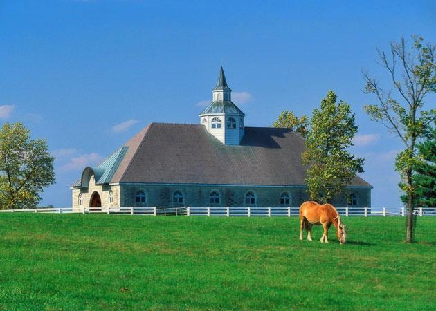 Kentucky Stud Farm