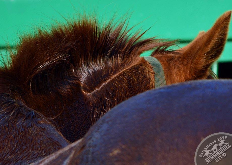 broodmares-foaling-season-prep-6.jpg