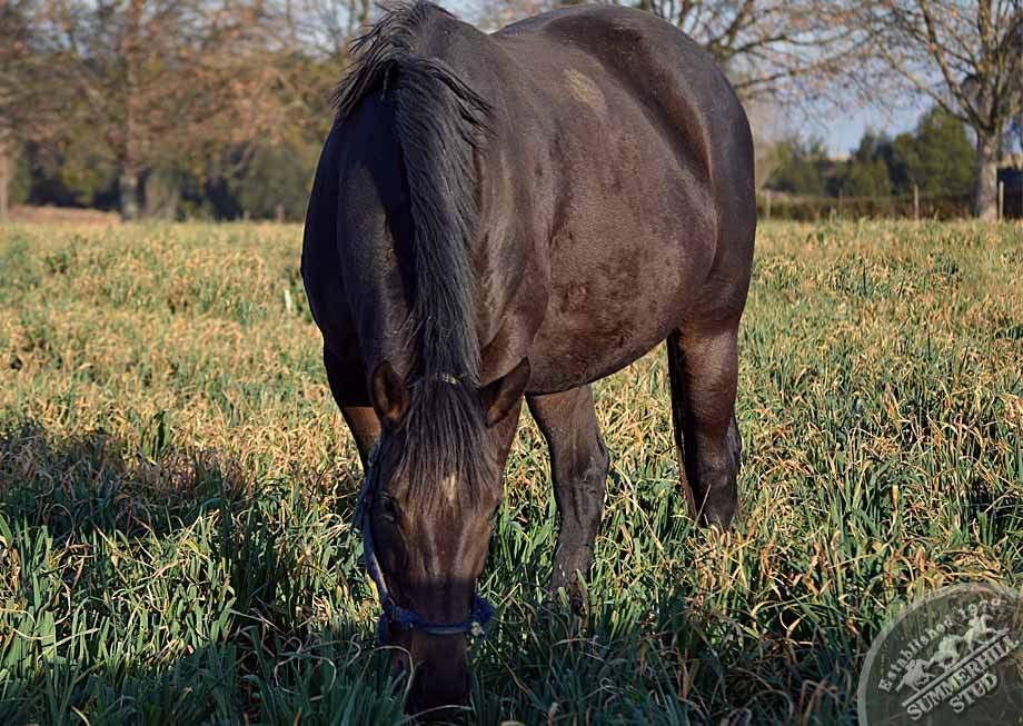 broodmares-foaling-season-prep-20.jpg