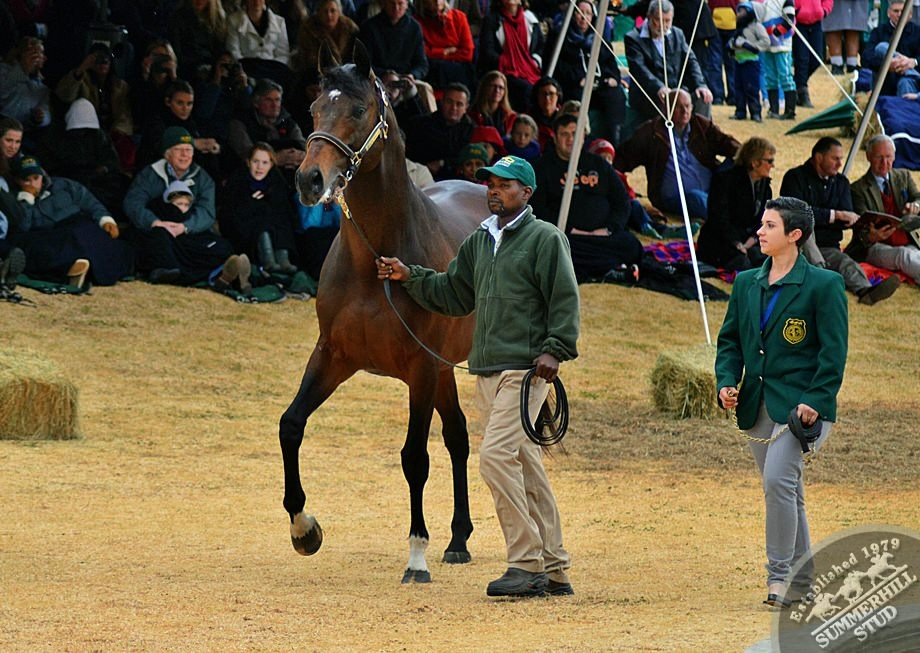 cathsseta-stallion-day-71.jpg