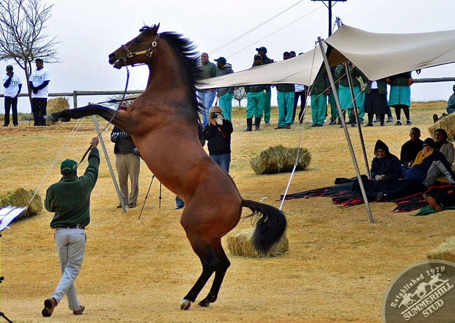 cathsseta-stallion-day-83.jpg