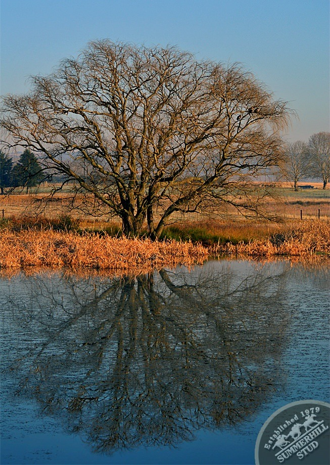 16-winter-day-kzn-midlands.jpg