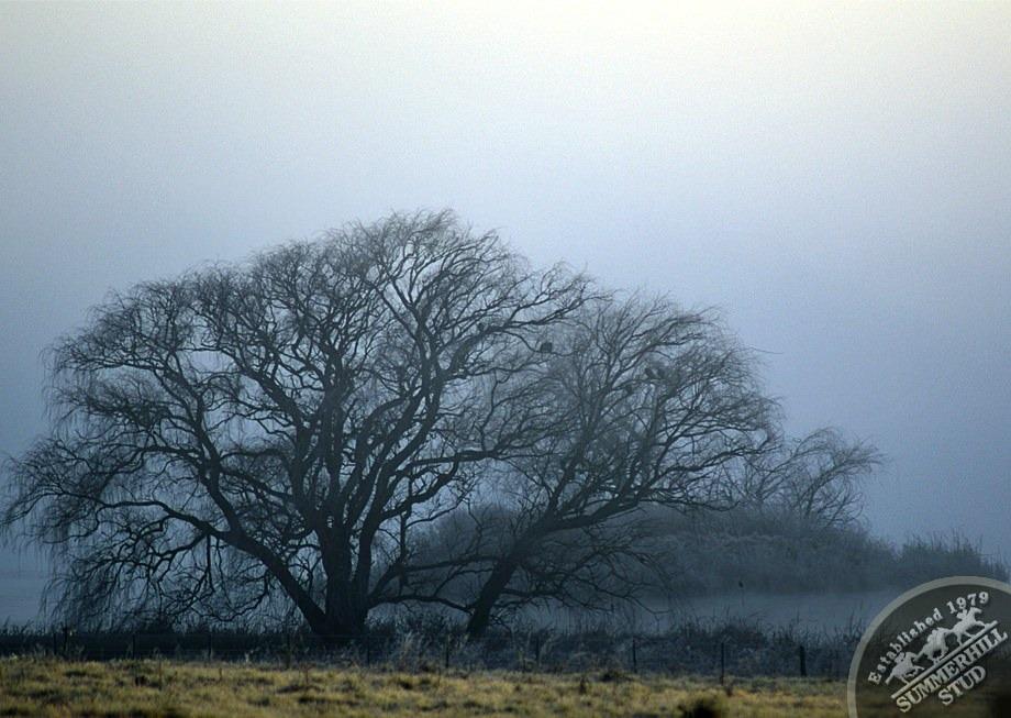 4-winter-day-kzn-midlands.jpg