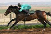 horse at full gallop