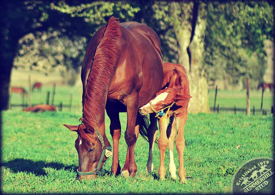 Mare and Foal 3