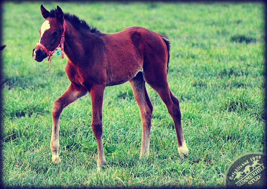 Foal 5